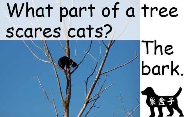 cats tree bark