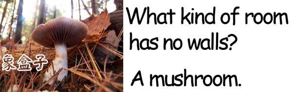mushroom 蘑菇/香菇