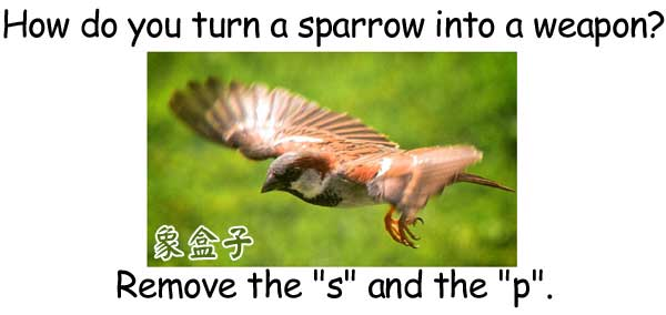sparrow arrow
