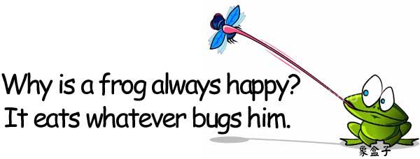 happy frog bug 快樂的青蛙 蟲子 煩擾 激怒