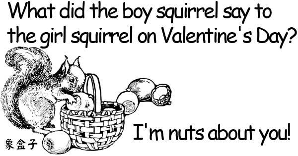 nuts valentine valentines day squirrel