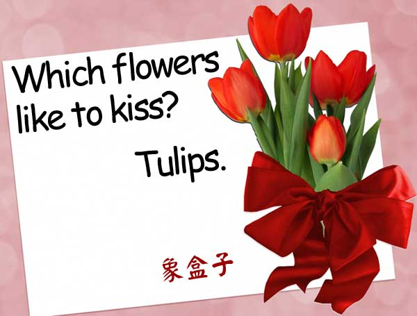 鬱金香 tulips lips kiss