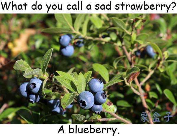 blue blueberry strawberry
