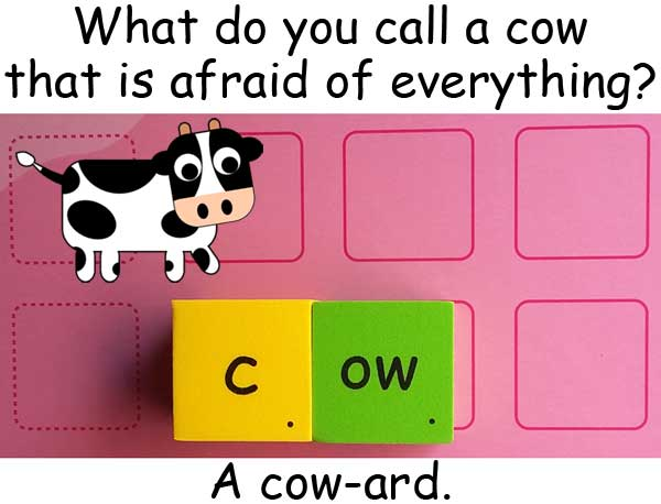 cow coward
