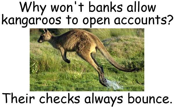 kangaroo 袋鼠 跳票 bounce check