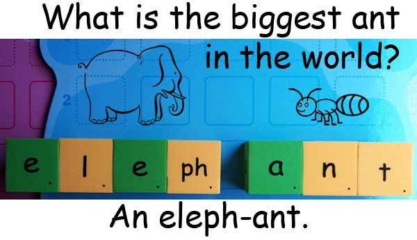 ant elephant