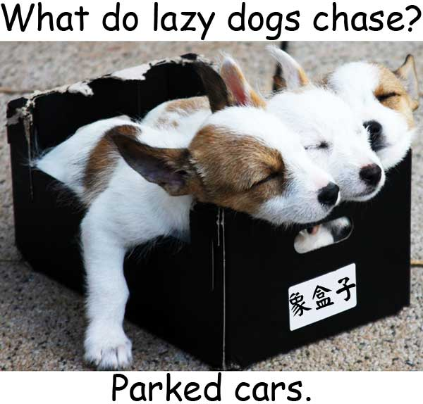 懶狗 lazy dogs parked cars