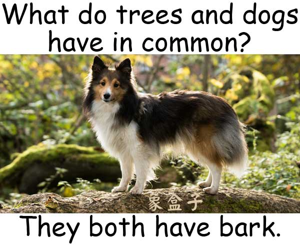 bark dogs trees