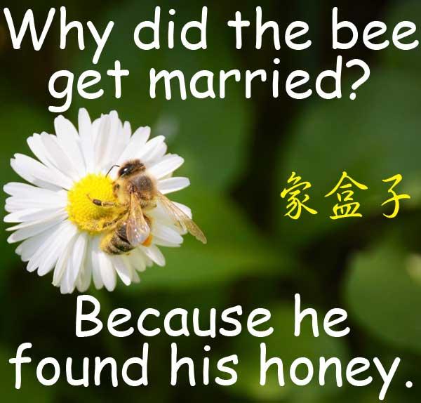 蜜蜂 bee honey 蜂蜜 寶貝 親愛的