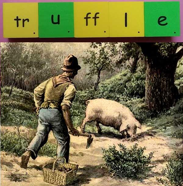 truffle 松露