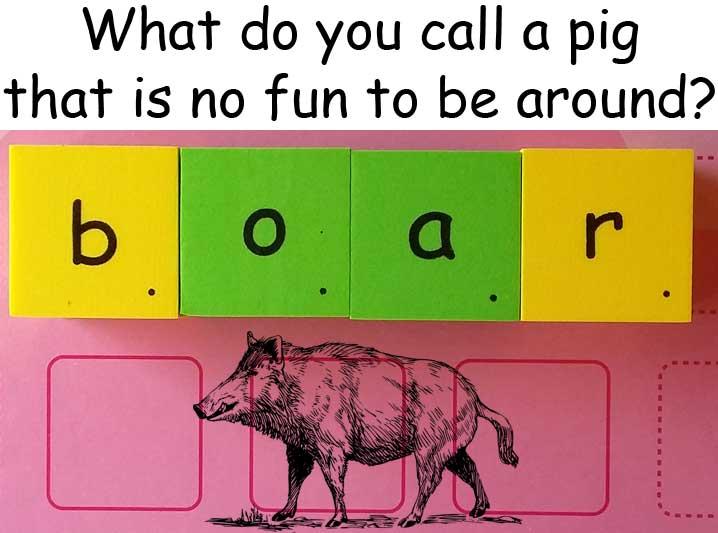 pig 豬 boar 野豬 bore homophones 同音異義