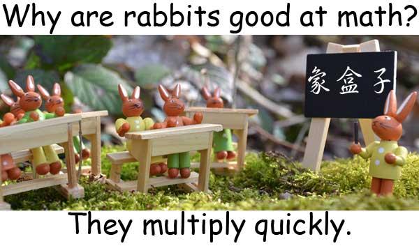 math 數學 兔子 繁殖 成倍地增加 rabbits multiply