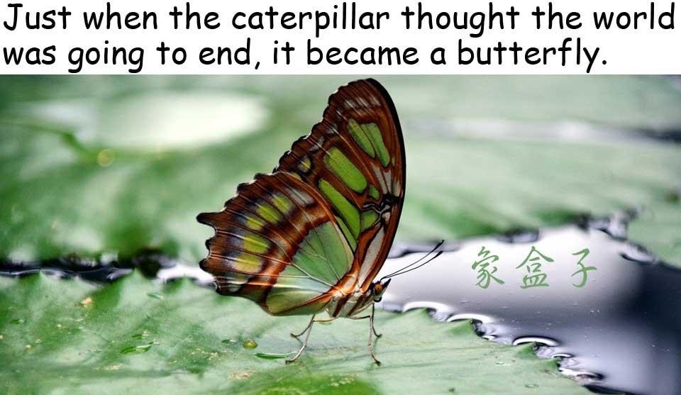 caterpillar 毛毛蟲 butterfly 蝴蝶
