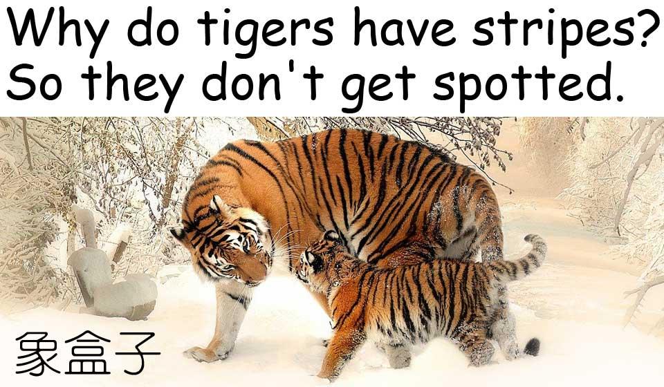 tiger stripes 老虎 條紋