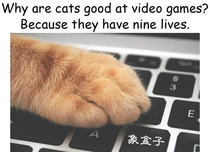 cats have nine lives 貓有九條命