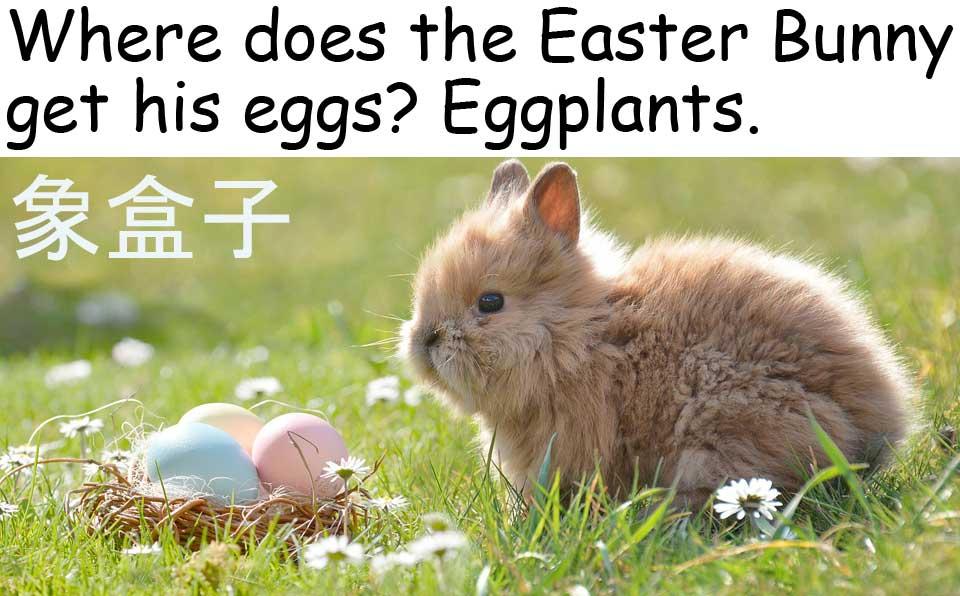 easter 復活節 easter bunny 復活節兔 復活節蛋 eggs