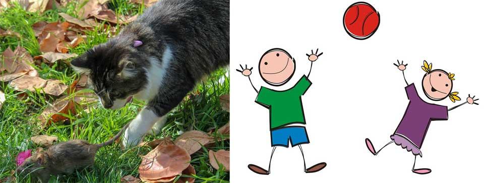 catch 貓捉老鼠 接球