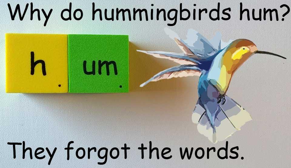 蜂鳥 hummingbird 哼 hum humming